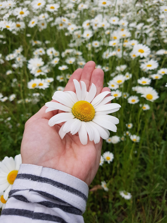 Mirjam van Elst Walking Exercise Flower Science of Well-Being